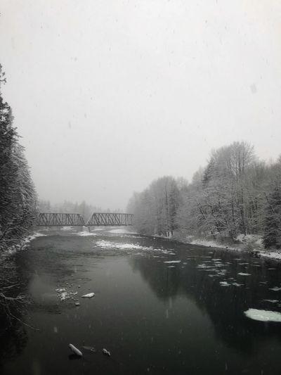 Snowy Saturday Tree