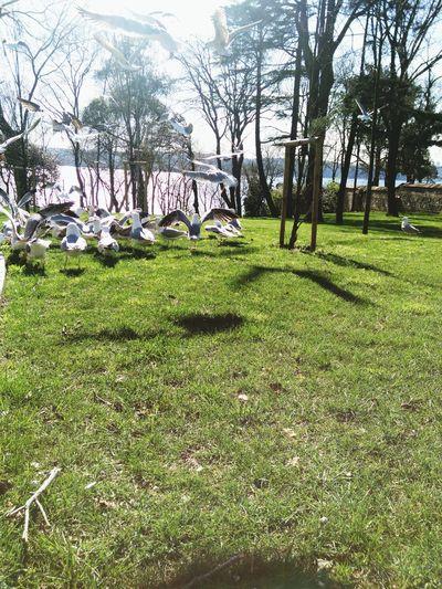Spring Into Spring Spring Sea Seagulls Beykozkorusu Istanbul Turkey Forest Park Grove Green Trees