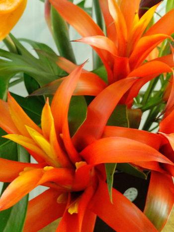 Nature_perfection Flower Vase Close Up Bromelias