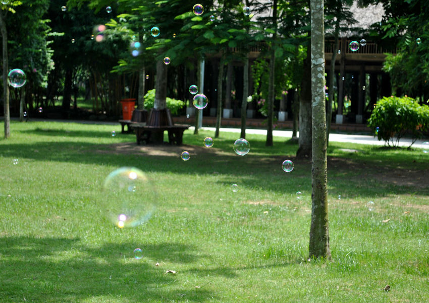 Architecture Bubble Wand Bubbles Day Golf Golf Course Grass Green Color Growth Nature No People Outdoors Peace Sport Tree