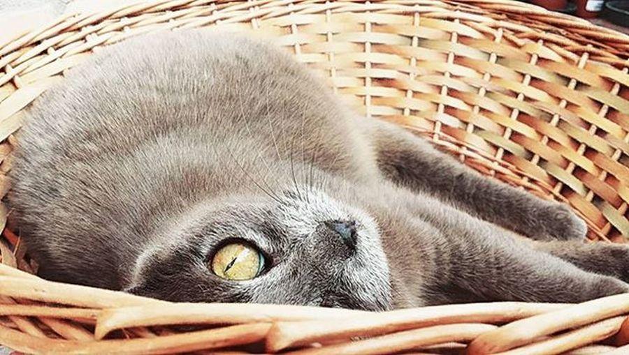 Miao Meow Gattidiinstagram Catsgram Miciabella Igersferrara Igersitalia Volgoferrara Gatti Gattoitaliano Italiancats Instacat Instacat_meows Instacatsgram Miciona Followforfollow Likeforlike Followme Followmypic Mostrafe2015 Photomypassion
