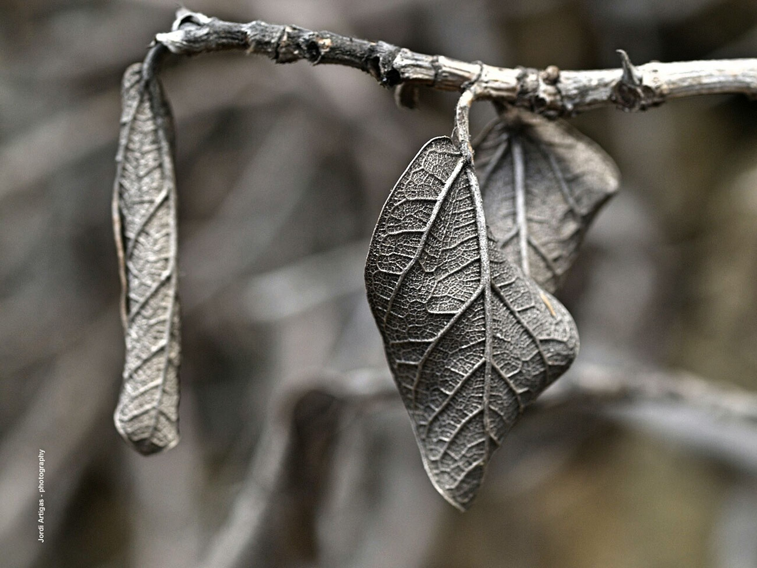 focus on foreground, close-up, hanging, winter, branch, cold temperature, twig, selective focus, season, nature, outdoors, day, snow, weather, covering, frozen, protection, dry, rope, no people