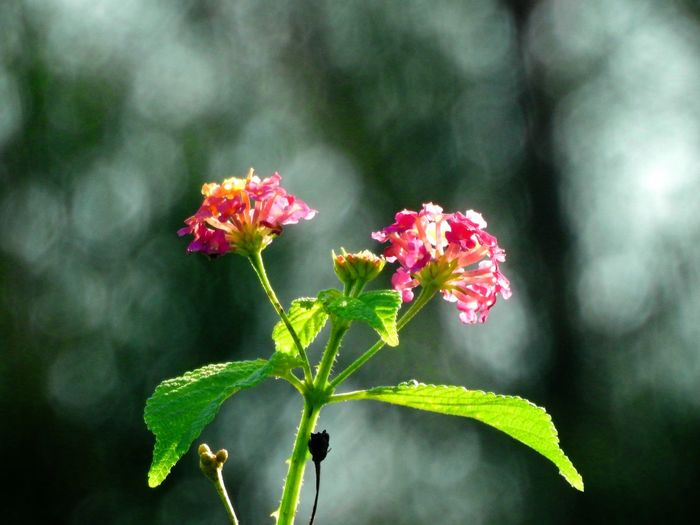 Plant Flowering Plant Flower Vulnerability  Fragility Freshness Close-up Growth Beauty In Nature Plant Part Focus On Foreground Leaf Nature Petal Flower Head No People Day Inflorescence Green Color Outdoors