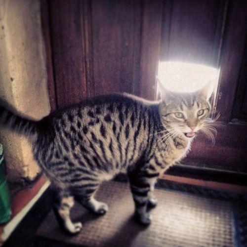 Flickr Flickrd Instagram Instagood webstagram follow followme instacool webstagram cat cats door doors follow