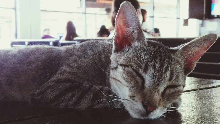 Close-up of cat sleeping on table