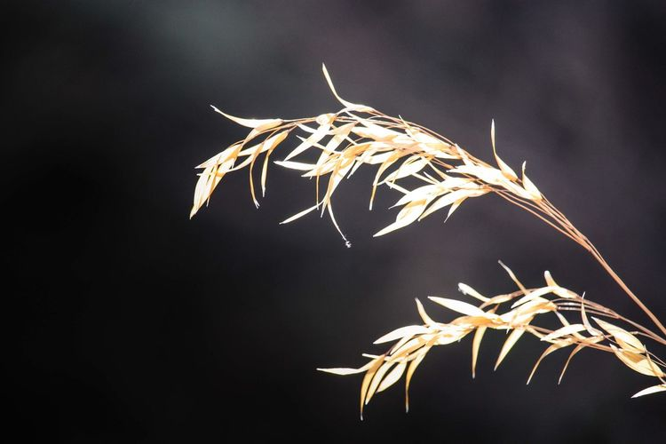 Close-up of dry leaf against sky at night