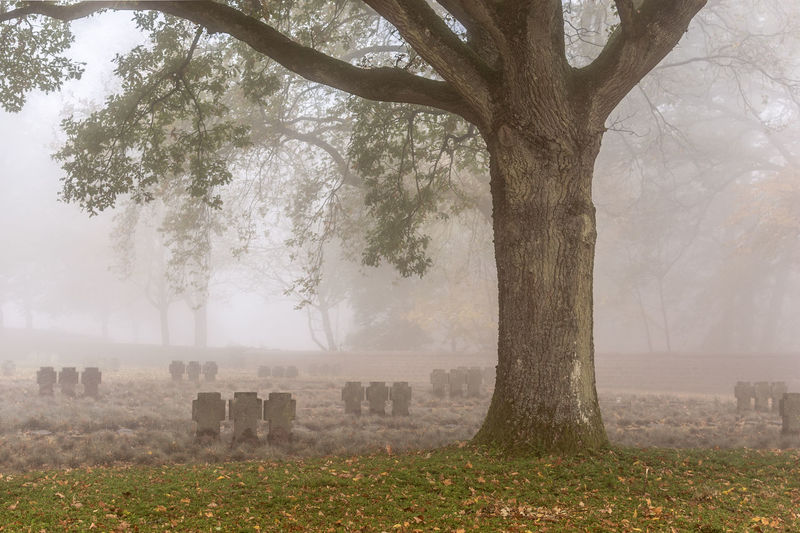 Cemetery in foggy weather