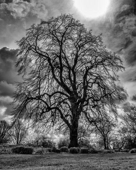 Bare Tree Beauty In Nature Black And White Botanic Gardens Cloud Cloud - Sky Cloudy Day Eye4black&white  EyeEm Dublin EyeEm Nature Lover Field HDR Monochrome Nature Non-urban Scene Outdoors Showcase April Sky Sun Sunlight Tranquil Scene Tranquility Tree