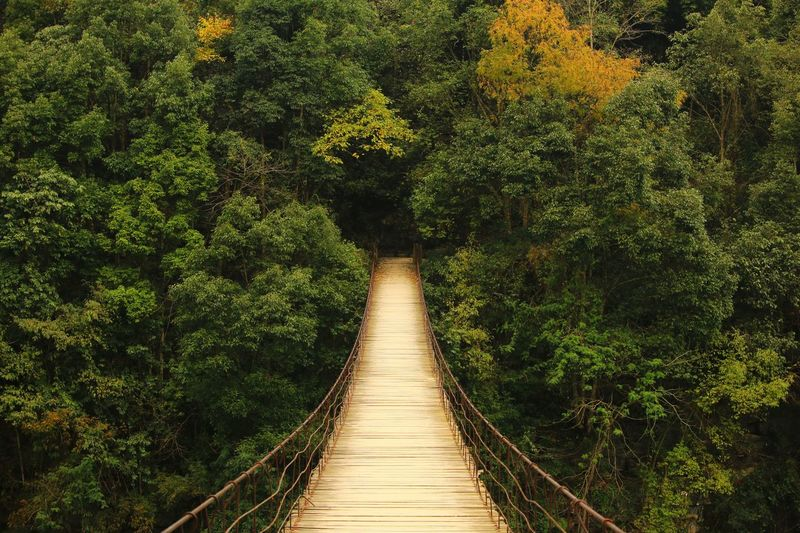 Empty footbridge against forest