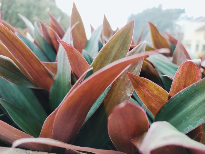 Close-up of succulent plant leaves