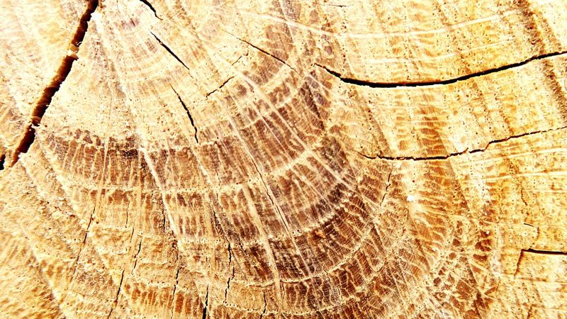 Tree Ring Full Frame Close-up Log Nature Backgrounds Tree Trunk Tree Wood - Material Timber Concentric Outdoors Cross Section Deforestation No People Macro Nature Textured  Abstract Nature Abstract Photography Plant Growth Sunlight Savethenature Savethetrees Savetherainforests