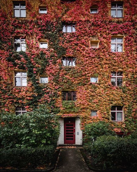 Number 12. Architecture Building Exterior Built Structure Window No People Residential Building Plant Day Red Outdoors Autumn Autumn Colors Leaves Façade Berlin Prenzlauer Berg