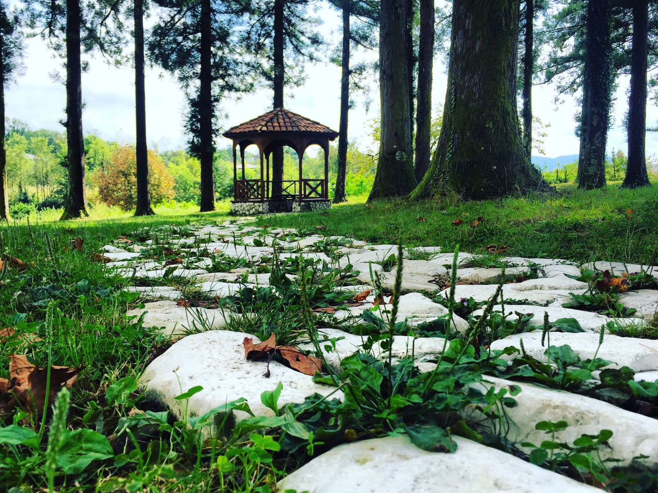 tranquility, tranquil scene, gazebo, grass, tree, built structure, park - man made space, scenics, nature, plant, tree trunk, green color, beauty in nature, growth, branch, footpath, garden, outdoors, solitude, day, no people, culture, surface level, remote, non-urban scene, formal garden, countryside, park, sunshade