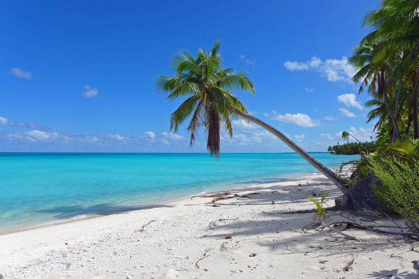 Atoll Beach Circumnavigation French Polynesia Pacific Rangiroa South Sea Tuamotu White Sand