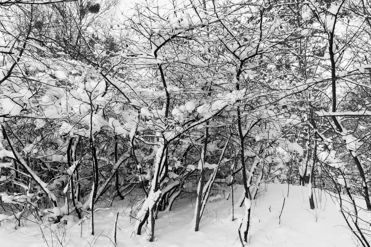 BARE TREES IN SNOW COVERED LAND