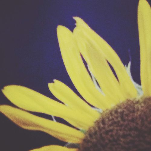 Night Photography EyeEm Nature Lover Sunflower 眠レナイ夜は、眠ラナイ歌ヲ