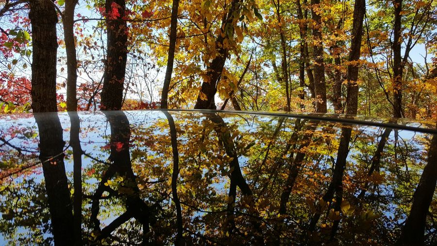 Tree Growth Nature Beauty In Nature Sunlight Sky No People Day Outdoors Backgrounds Full Frame Water Scenics Branch Horizontal Fall Fall Leaves Beauty In Nature Multi Colored Reflection Glass Tranquility Autumn Daylight Abstract