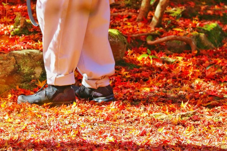 Human legs on fallen red maple leaves ground Copy Space Human Ground Fallen Season  Japan Lifestyle Tourism Travel Autumn Maple Red Low Section Human Leg One Person Human Body Part Body Part Lifestyles Standing Shoe Leisure Activity Day Women Nature Real People Plant Part Leaf Plant
