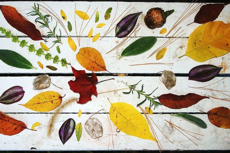 Close-up Leaf Colors and patterns Colors Of Nature Color Nature Textures Nature's Diversities Susannasphotographs