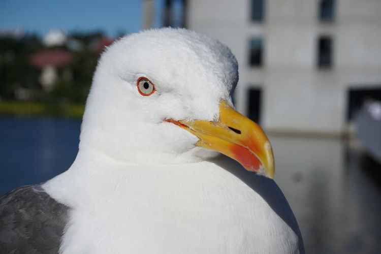 This seagull