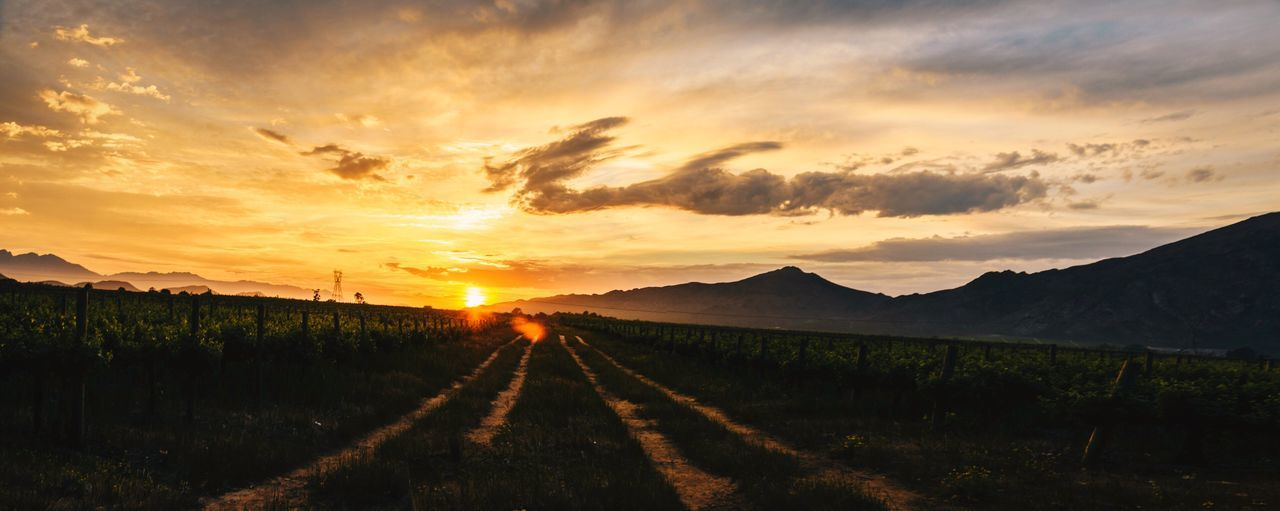 Mis-stitched, but it works Sunset Road The Way Forward Nature Scenics Tranquil Scene No People Landscape Beauty In Nature Tranquility Rural Scene Sky Outdoors Day Nikonphotography Wine Farm Nikon Sunrise Lens Flare South Africa Vineyard Wine Sunlight Mountain Be. Ready.