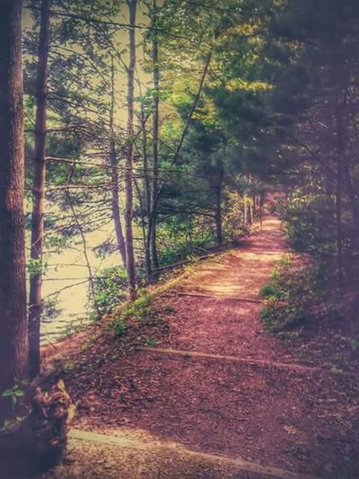 Learn & Shoot: Leading Lines Beautiful Nature Naturelovers EyeEm Nature Lover Naturetrails Naturewalks Naturetrailtime
