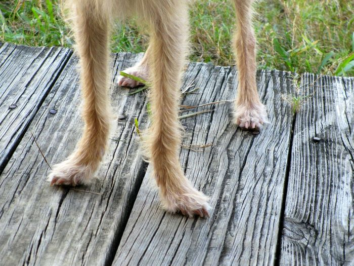 She's got legs Pets Corner Dogs Dog Puppy Legs Legs Legs Puppies Animal Themes