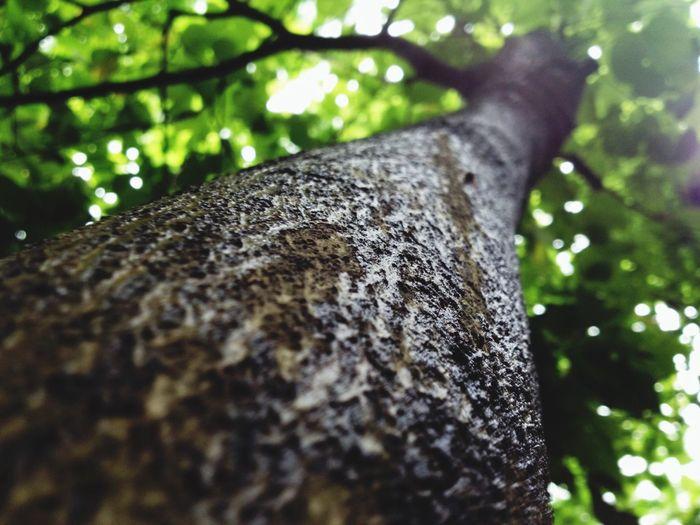 有谁孤独却不企盼 一个梦想的伴 Natural Beauty Tree I Miss You Lost In Forest,..