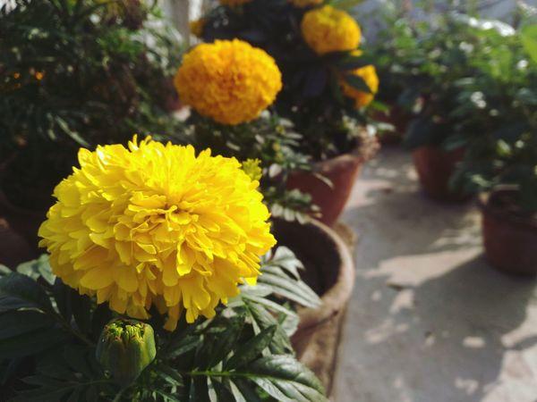 Close snap Natural Beauty Flowers Beautiful SmallFlowers