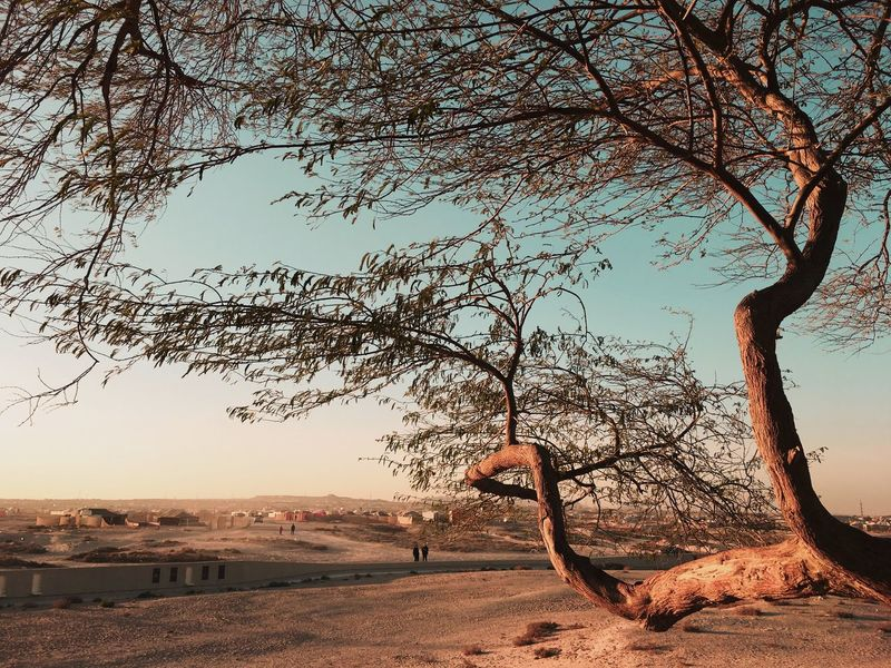 Tree of life, Bahrain 🇧🇭 EyeEm Best Shots EyrEmNewHere Premium Collection Sky Tree Nature Land Water Plant Beach Non-urban Scene No People Tranquil Scene Group Of Animals Scenics - Nature Outdoors Sunlight Tranquility Beauty In Nature Sea Day Flock Of Birds Branch The Great Outdoors - 2018 EyeEm Awards The Still Life Photographer - 2018 EyeEm Awards The Traveler - 2018 EyeEm Awards EyeEmNewHere