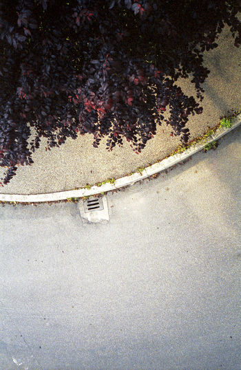 View from above, 1999 Above Analog Photography Close-up Colour Photography Day Film Film Photography From Above  High Angle View Loneliness Manhole  Nature No People Outdoors Sidewalk Solitude Street Street From Above Suburbia Tree