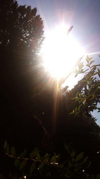 Sun Sun Rays Beautiful Nature Nature ☉☉ Nature Collection Nature Photography Beautiful ☉☉☉ ☉🌞🌞☉ ☉