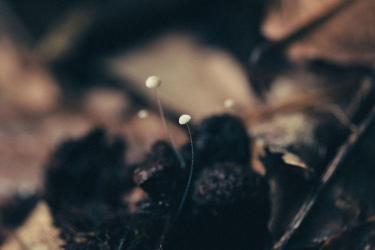 Close-up Forest Fragility Mushroom Mushroom_pictures Mushroomphotography Nature Tiny