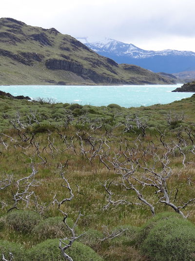 Beauty In Nature Day Environment Grass Growth Land Landscape Mountain Mountain Range Nature No People Non-urban Scene Outdoors Patagonia Plant Scenics - Nature Sky Torres Del Paine Tranquil Scene Tranquility Water Wilderness