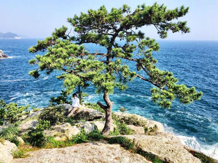 pinetree in front of blue sea Powerful Textile Compromising Of Three Subjects