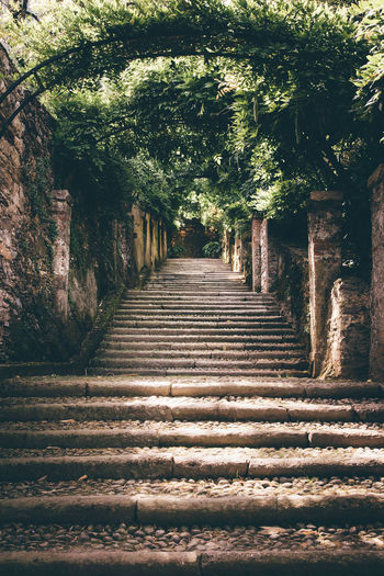 Stone Material Historical The Past Romantic Tree Shadow Sunlight Stairway Steps And Staircases Staircase Pathway Steps Walkway Growing Stairs Narrow