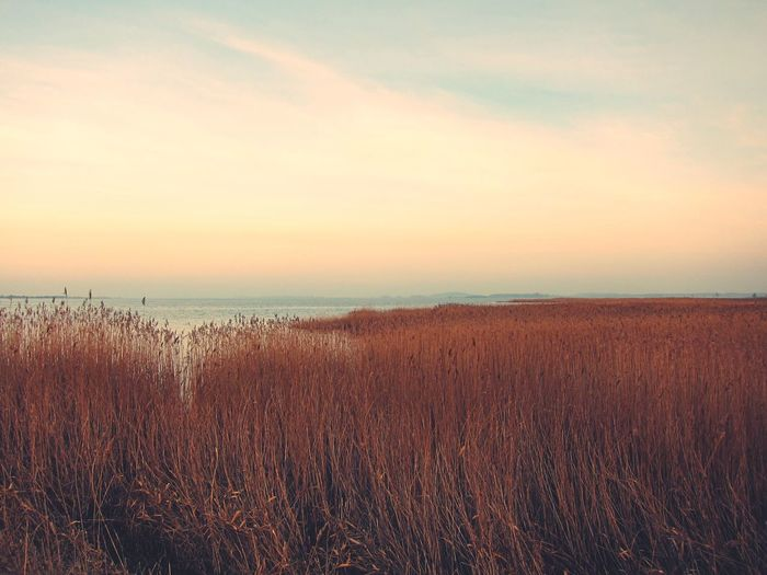 Nature Tranquil Scene Scenics Tranquility Beauty In Nature Sea EyeEm Best Shots Outdoors Grass Sky No People Field Water Landscape Horizon Over Water Day Travel Destinations Beach EyeEmBestPics Sunset Reed Rügen Sea And Sky Seaside Seventies
