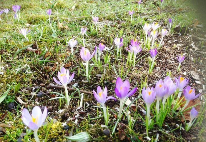 Gardening Spring Has Arrived
