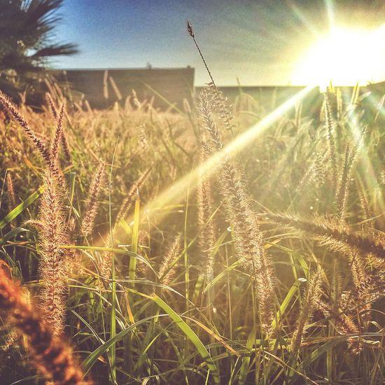 The Calmness Within Morning Jog