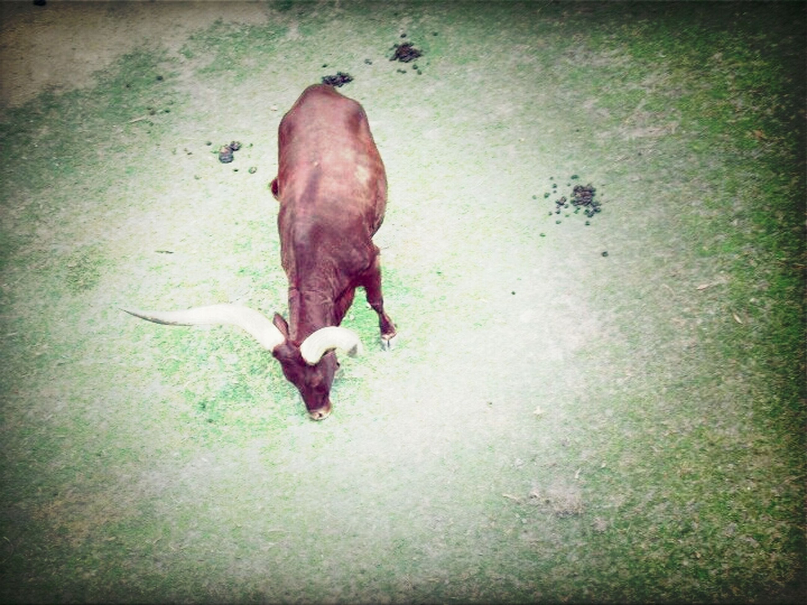 animal themes, one animal, domestic animals, mammal, full length, wildlife, animals in the wild, high angle view, pets, dog, side view, walking, zoology, auto post production filter, field, two animals, no people, shadow, vertebrate, nature