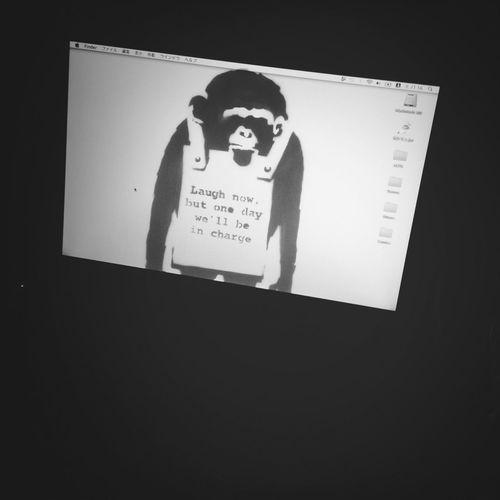 Rebooted My Blackbook