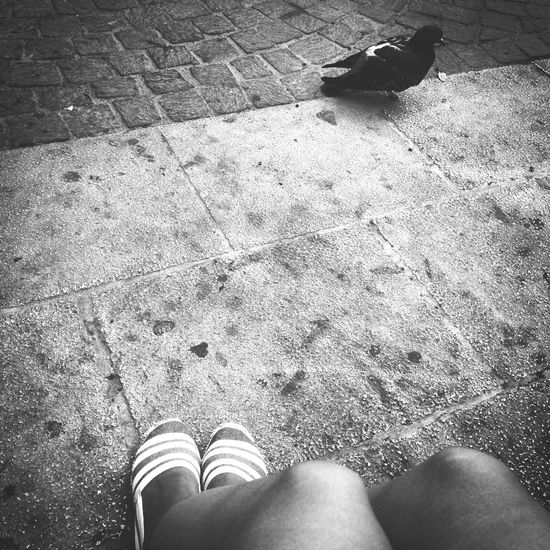 Taking Photos Hello World Relaxing Malta Blackandwhite Street Good Morning Pretty Bird Valetta Summertime Hi! Like Life
