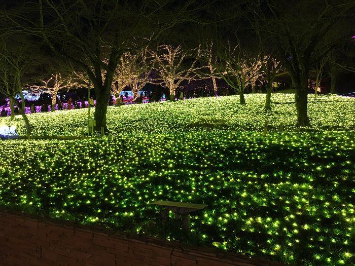 LEDLights Illumination Light Night
