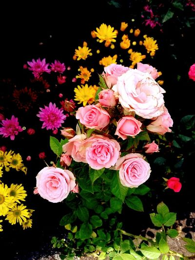 Flowers, Nature And Beauty NaturalBeauty Flowers Flower Collection