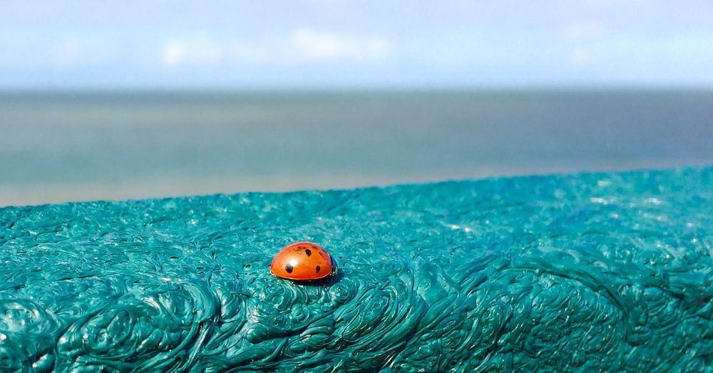 High angle view of ladybug on retaining wall by sea against sky