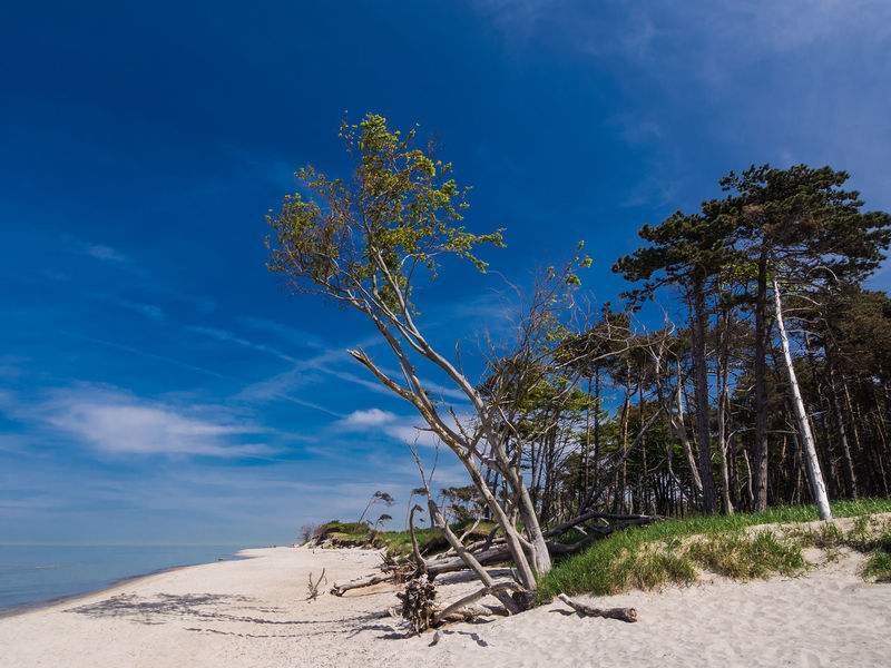 Baltic Sea coast. Baltic Sea Beach Beauty In Nature Blue Coast Day Fischland-darß-zingst Growth Landscape Nature No People Outdoors Plant Sand Scenics Shore Sky Tree Weststrand Wilderness