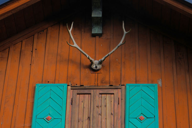 Low angle view of antler mounted on house