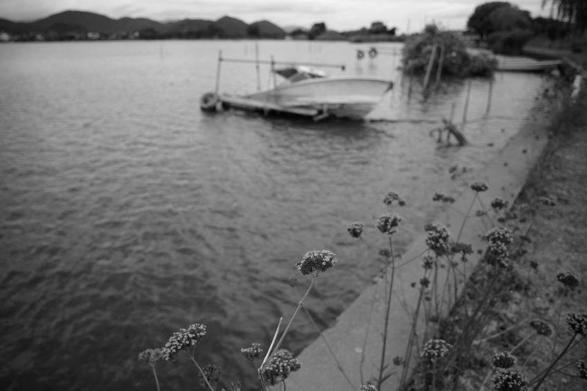 Boats Bw Blackandwhite Monochrome Leica Voigtlander Lens Color-skopar 21mm F4 M9-p Flower Flowers Boat Harbor Calm Shore Lakeside