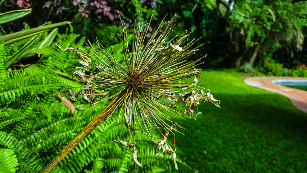 Beauty In Nature Close-up Dandelion Seed Flower Flowering Plant Freshness Green Color Growth Nature Plant Tranquility