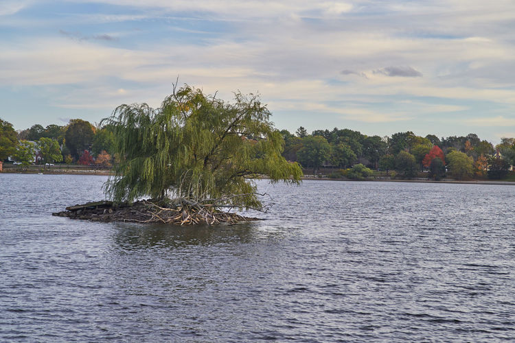 Jamaica Pond Beauty In Nature Cloud - Sky Day Island Lake Nature No People Outdoors Scenics Sky Tranquil Scene Tranquility Tree Water Waterfront Waves